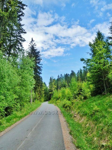 Lesní silnička po úbočí Ucháče k Pekařovské cestě