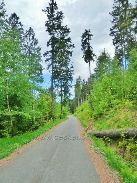 Lesní silnička k rozcestí Pekařovská cesta