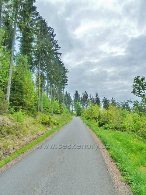 Lesní silnička k rozcestí Pekařovská cesta mírně  klesá po úbočí Ucháče
