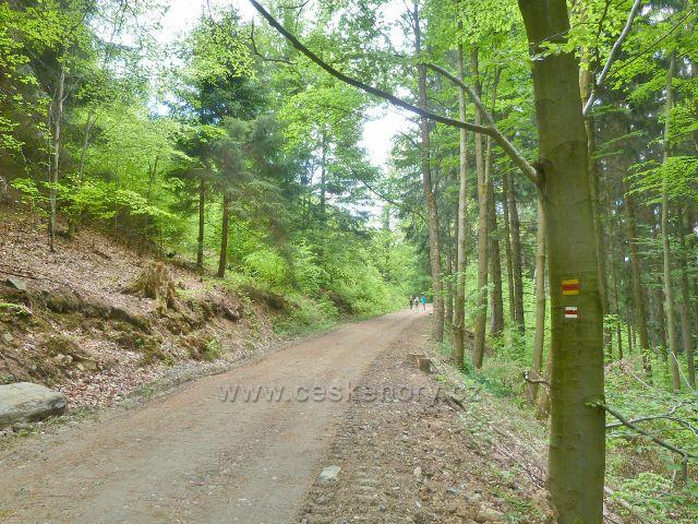 Trasa cesty po výchdním úbočí Ucháče po červené TZ  C 6155 k rozcestí pod Jelení skalkou