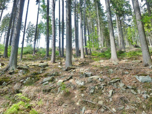 Kamenitý je i terén lesního porostu nad cestou po červené TZ  k údolí Losinky