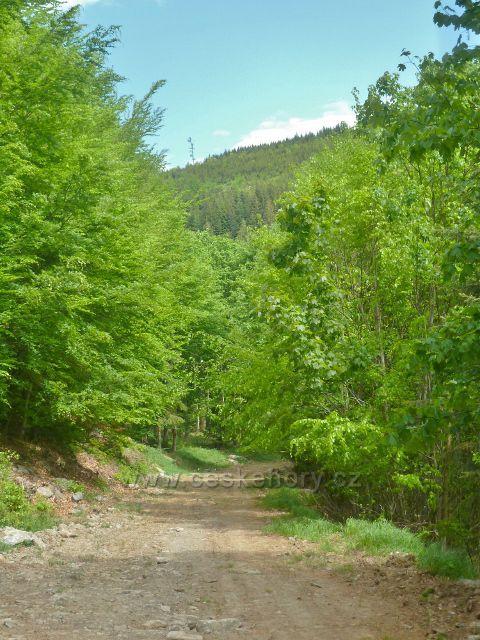 Cesta po červené TZ po úbočí Ucháče klesá do údolí Losinky