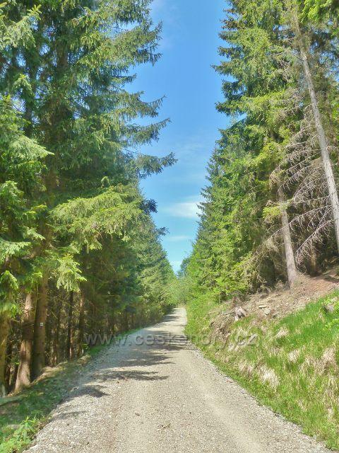 Štětovaná cesta po modré TZ mírně stoupá k vrcholové části Ucháče