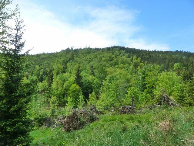 Zalesněný vrchol Ucháče (1009 m.n.m.)