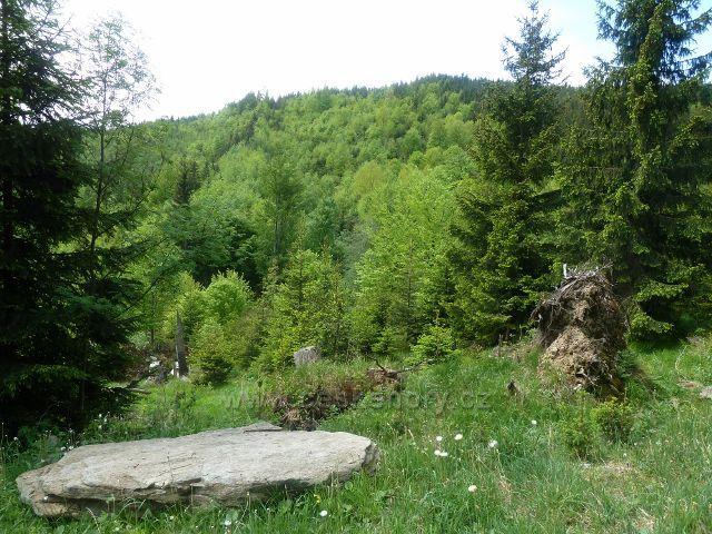 Zalesněný vrchol Ucháče dosahuje výšky 1009 m.n.m.