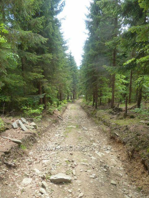 Cesta po modré TZ mírně stoupá severovýchodním úbočím Ucháče