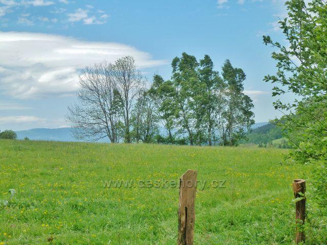 Pastvina nad Přemyslovským sedlem