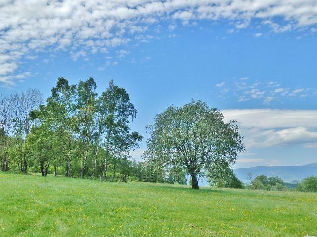 """Pastviny v lokalitě """"Letní stráň"""" nad Přemyslovským sedlem"""