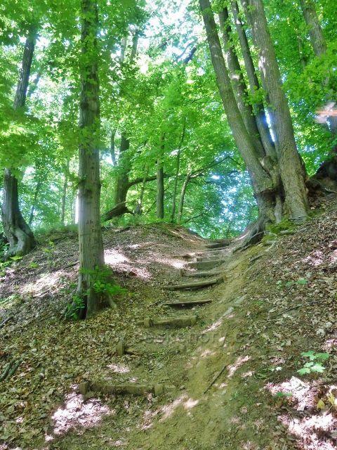 Bludov - stezka na vrch Brusná