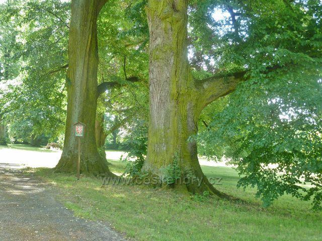 Bludov - památné stromy v zámeckém parku