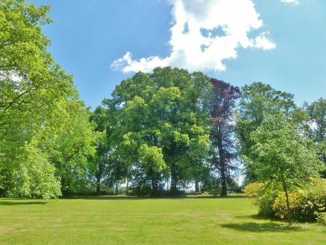 Bludov - skupina památných strémů v zámeckém parku