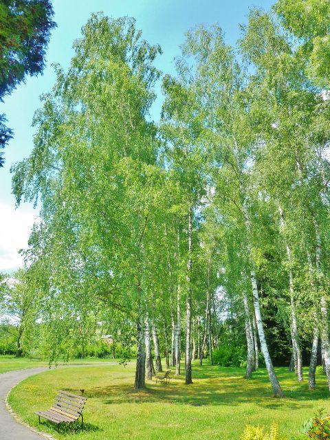 Bludov - lázeňský park