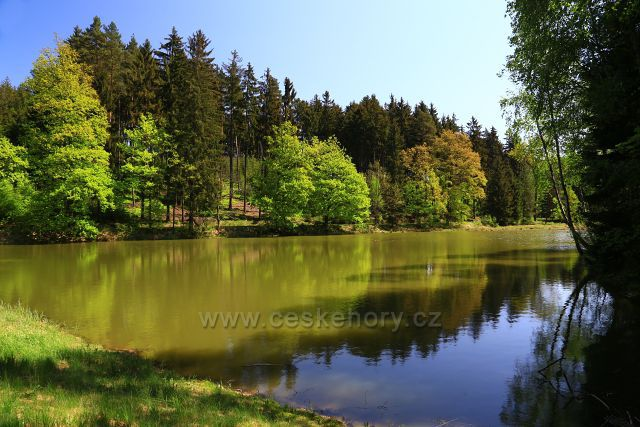 Lesní rybník
