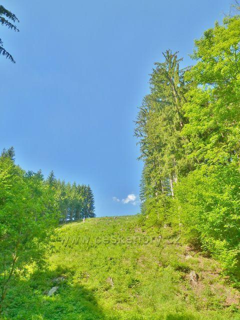 Pastviny - zalesněný svah v údolí potoka Orlička