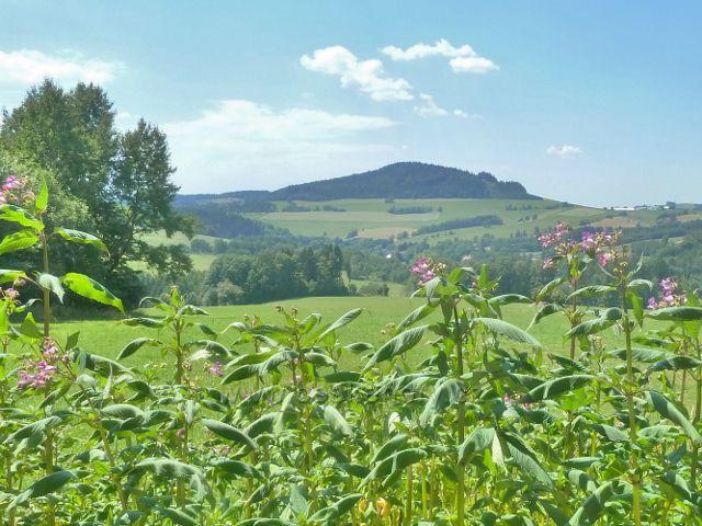 Mladkov - pohled od bývalé mladkovské lesní školky na část obce Celné a na vrch Studený (721 m.n.m.)