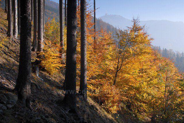 podzim pod Lysou