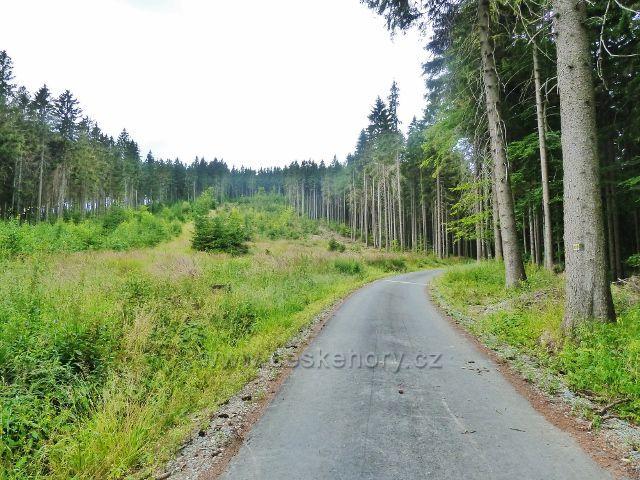 Bohdíkov - lesní porost podél silničky do Komňátek po níž vede žlutá TZ