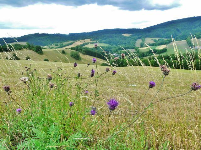 Bohdíkov - pohled z cesty po žluté TZ do Komňátek na pastviny nad Štědrákovo Lhotou