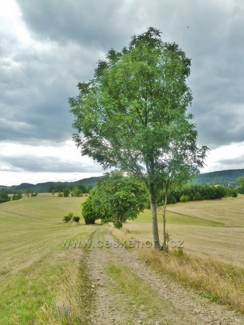 Bohdíkov - cesta po žluté TZ nad Komňátkama a Štědrákovo Lhotou