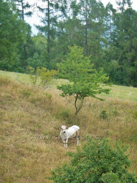 Bohdíkov - pastvina nad Komňátkama