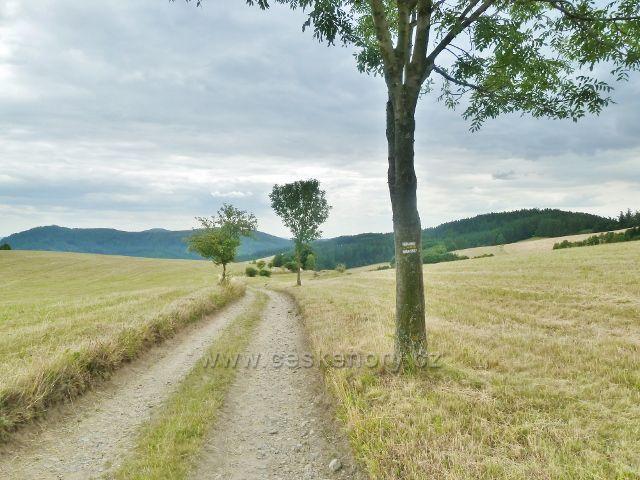 Bohdíkov - cesta po žluté TZ nad Komňátkama protíná rozsáhlé pastviny