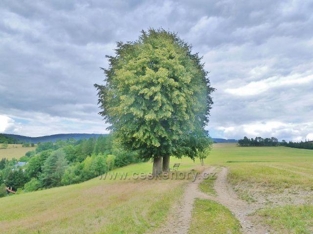 Bohdíkov - odpočinkové místo na trase po žluté TZ nad Komňátkama