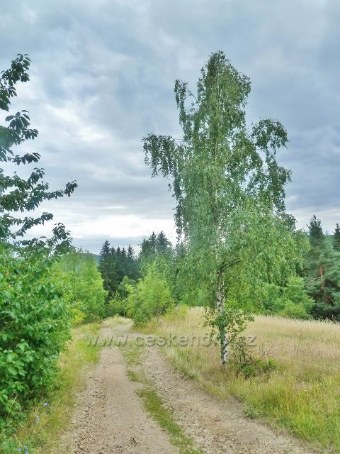 Bohdíkov - cesta po žluté TZ po pastvinách do Komňátek