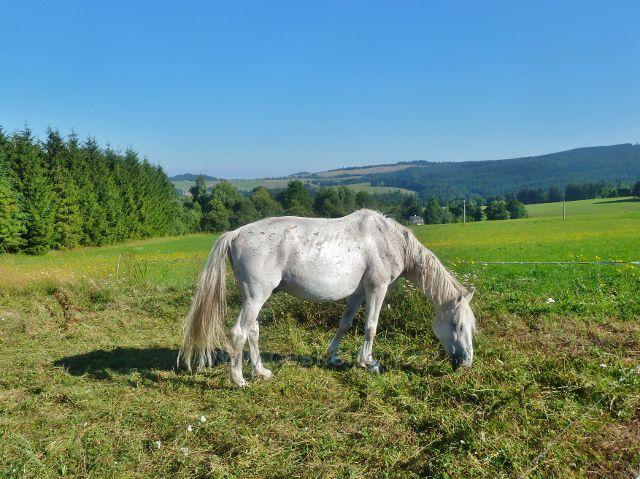 Písařov - pastva koní na Písařovském sedle
