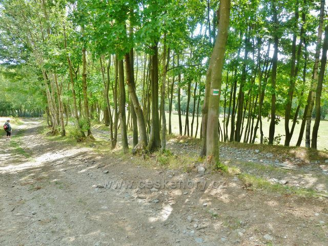 Štědrákova Lhota - cesta po zelené TZ po pastvinách k obci