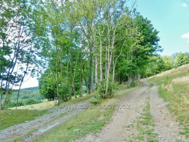 Štědrákova Lhota - cesty po zelené TZ po pastvinách k obci