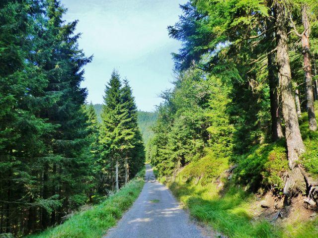 Zpětný pohled od Zbojnické chaty na kolemjdoucí cestu, po níž vede žlutá TZ