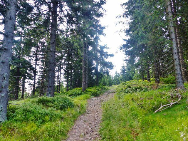 Malá Morava - cesta po červené a zelené TZ od sedla Puchača na vrchol vrchu Hleďsebe