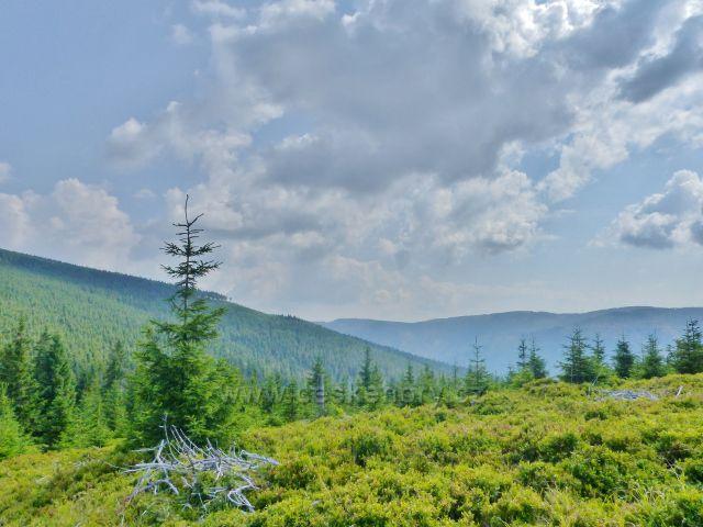 Dolní Morava - pohled z úbočí vrchu Hleďsebe k protilehlé Sušině, vpředu je úbočí Malého Sněžníku