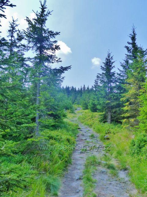 Dolní Morava - hraniční cesta po vrcholu Hleďsebe