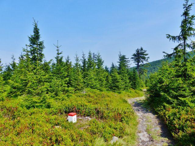 Dolní Morava - vrchol Hleďsebe pokrývají koberce borůvčí