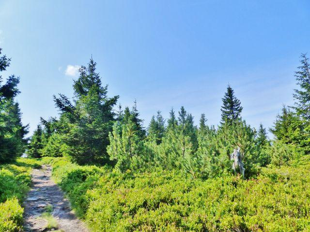 Dolní Morava - stezka po červené a zelené TZ po vrcholu Hleďsebe
