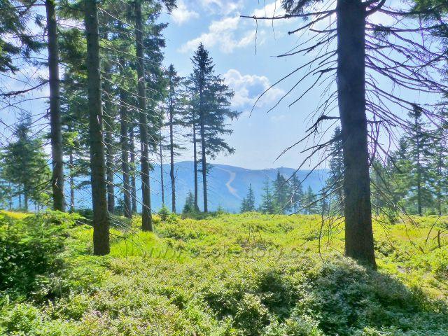 Dolní Morava - průhled ze sedla pod Klepým na protilehlý vrch Slamník (1232 m.n.m.)