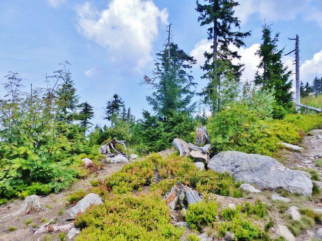 Dolní Morava - stezka po kamenitém údočí Klepého do sedla pod Jelení horou