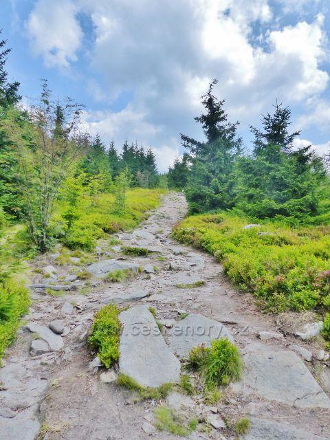 Dolní Morava - sestupová cesta po červené TZ jde po státní hranici až do sedla pod Jelení horou