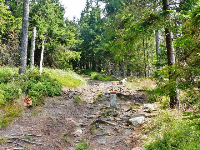 Dolní Morava - sestupová cesta po červené TZ od rozhledny Klepáč do sedla pod Jelením vrchem sleduje stále státní hranici
