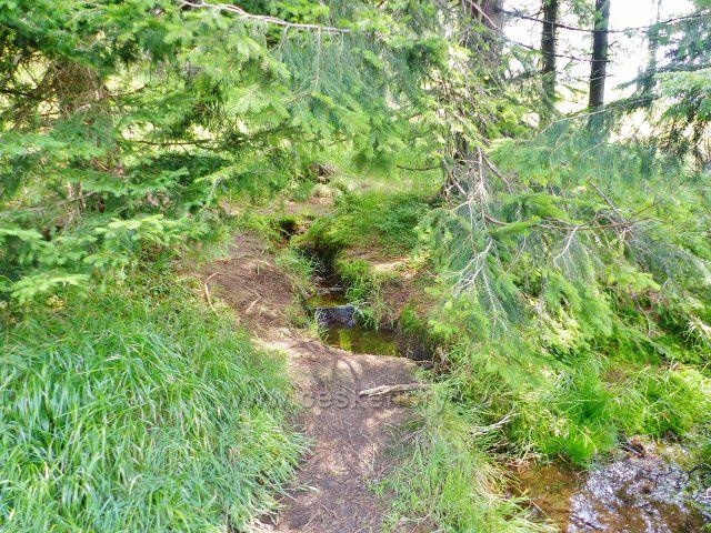 Dolní Morava - lesní pramen u sestupové cesty z Klepáče do sedla pod Jelením vrchem