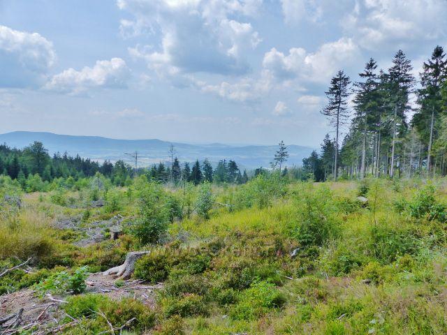 Dolní Morava - následky orkánu Kyrill na úpatí Klepého jsou patrny jak na české tak i polské straně .Na obzoru se rýsují Bystřické hory