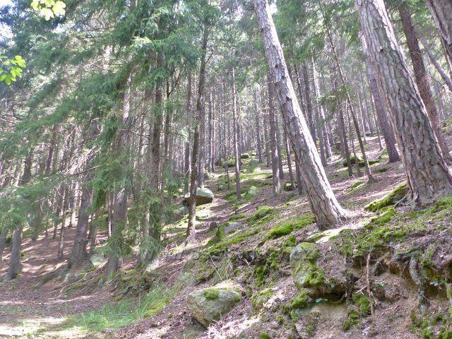 Bečov nad Teplou - cesta po zelené TZ ke Třem rybníkům mírně stoupá kamenitým údolím Bečovského potoka