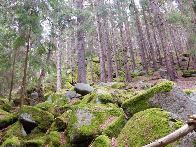 Bečov nad Teplou - kamenitá partie cesty po zelené TZ ke Třem rybníkům