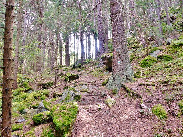 Bečov nad Teplou - kamenitý úsek cesty po zelené TZ ke Třem rybníkům