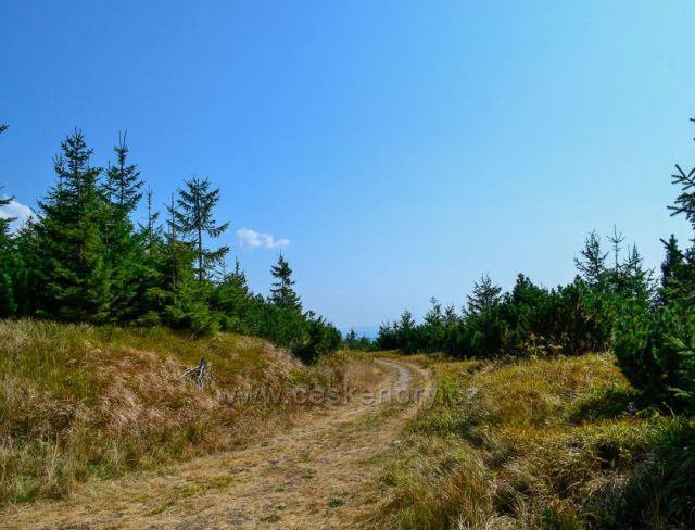 Lyžařská stopa v létě