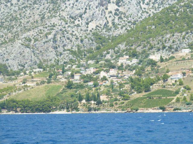 vinice na ostrově Brač