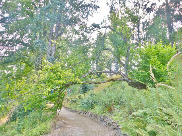 Bečovská botanická zahrada - cesta ve střední části zahrady