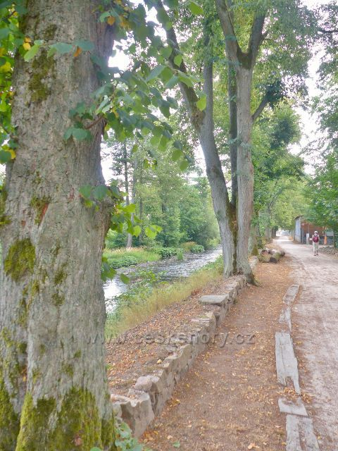 Bečovská botanická zahrada - cestu od vstupní brány k vlastní zahradě lemuje zčásti stromová alej
