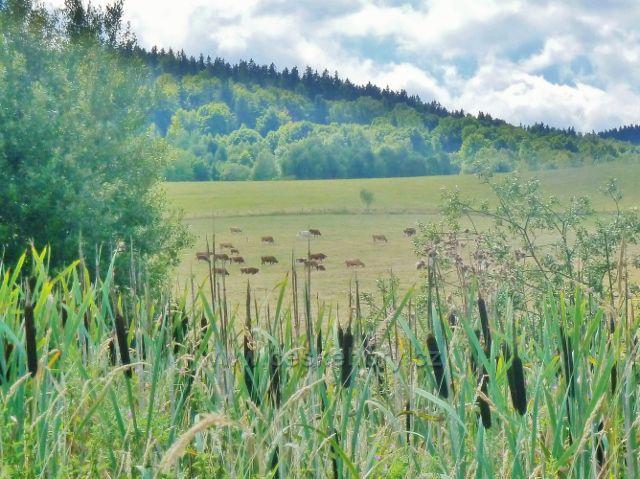 Podlesí - orobinec na okraji pastviny pod obcí